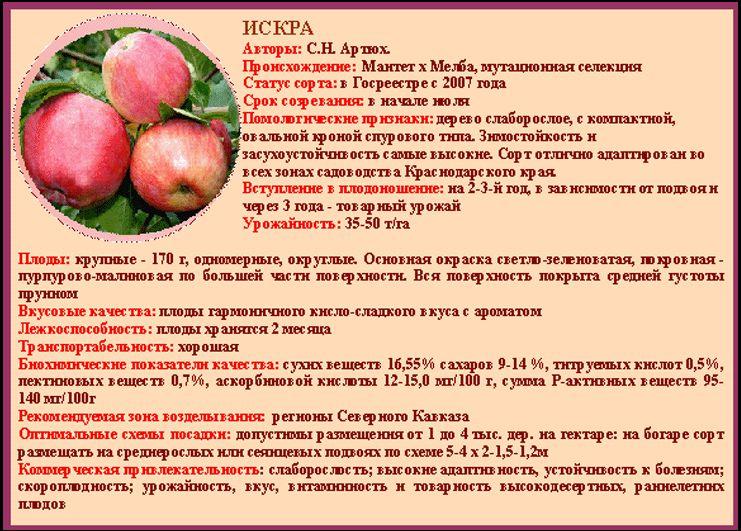 сорта яблонь и яблок с фото