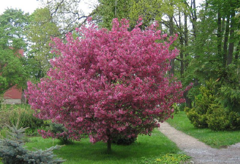 Садовые цветы и кустарники 157