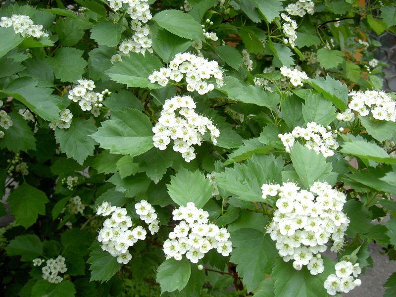 Как красиво посадить декоративные кустарники: основные критерии размещения