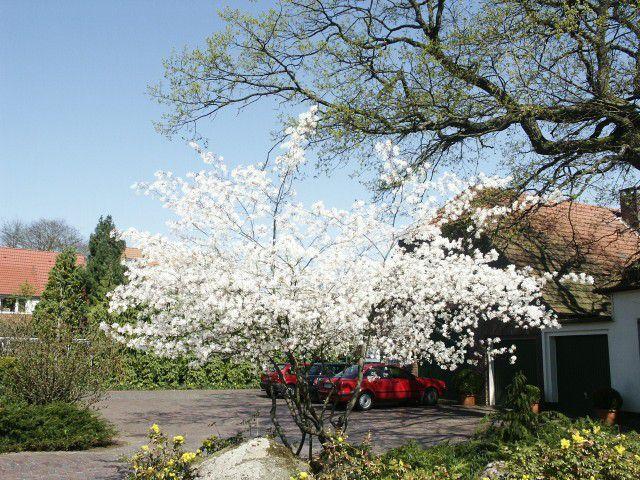 Цветы ирга кустарники и деревья