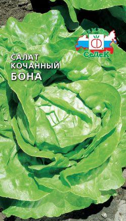 Сорта кочанного салата