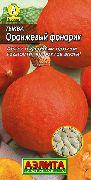 Тыква китайский фонарик выращивание 31