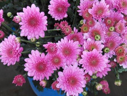 """материалы связанные с  """"доставка цветов на дом ставрополь быстро..."""