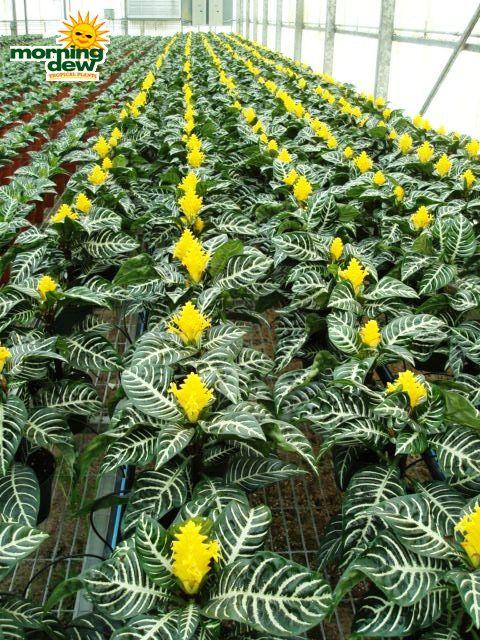 Домашние растения и цветы фото